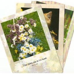 Nederlands, Ansichtkaarten met Bijbeltekst, Set met 30 stuks