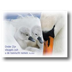 Nederlands, 10 Kaarten met Bijbeltekst, Psalm 91:4